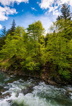 powerful mountain river and forest on a cliff. gorgeous nature scenery in spring time with beautiful sky. power of nature concept Stock Photo