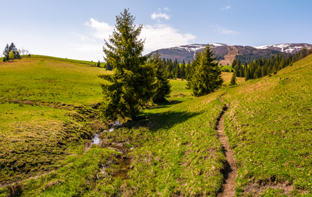 path through grassy slope in to the forest. beautiful springtime landscape with snowy mountain tops in the distance