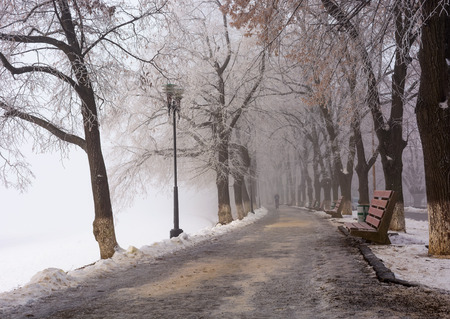 Longest linden alley in europe. Winter scenery on the river embankment at foggy sunrise in Uzhgorod, Ukraine.