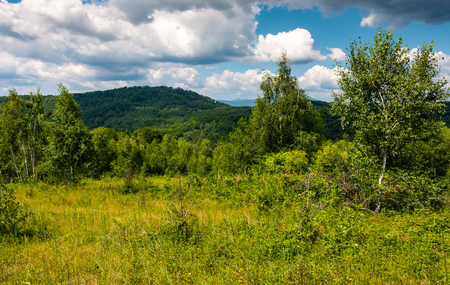 grassy meadow in forest on a cloudy day. lovely wild nature summer scenery in mountains. location Uzhanian National Nature Park, Ukraine Фото со стока