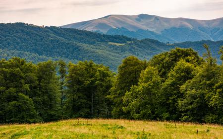 grassy meadow on forested hillside of Carpathians. lovely summer landscape in mountains. location near Svydovets mountain ridge, Ukraine 版權商用圖片