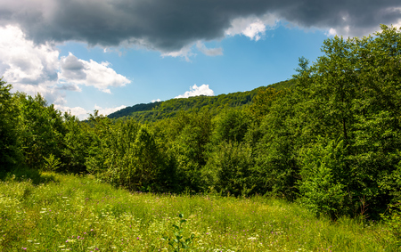 grassy meadow in forest on a cloudy day. lovely wild nature summer scenery in mountains. location Uzhanian National Nature Park, Ukraine Stock Photo