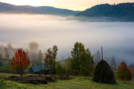 안개가 아침에 농촌 지역입니다. 산속에 화려한 시골 풍경