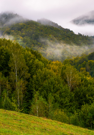 fog and low clouds over the forested mountains. mysterious scenery in deep autumn Stock Photo