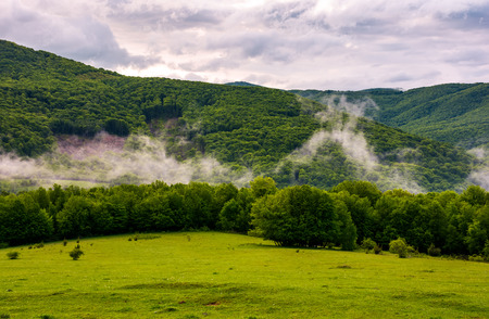 fog rise above the forest behind the grassy meadow on hillside. beautiful nature springtime scenery in mountains Stock Photo