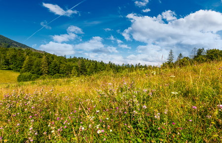 森の近くに野生のハーブを持つ草原。山岳地帯の美しい自然夏の風景 写真素材