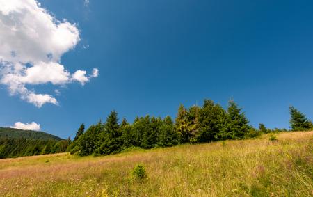 森の近くの野生のハーブと芝生の草原。中山間地域の美しい自然夏風景