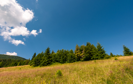 grassy meadow with wild herbs near the forest. beautiful nature summertime scenery in mountainous area Stock Photo