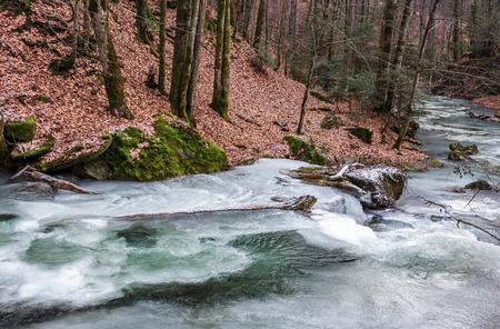 雪のない森の中の凍った川。未定義の自然条件
