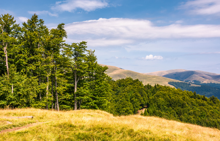 beech forests of Carpathian mountains. gorgeous landscape of Svydovets mountain ridge. beautiful nature scenery in late summer