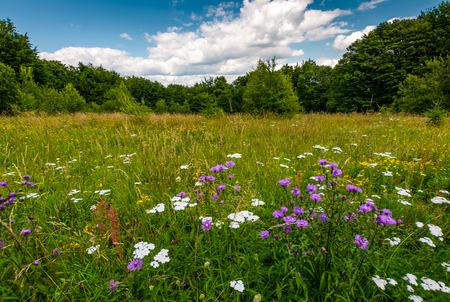 grassy glade with wild herbs. beautiful nature scenery among the forest in summertime Stok Fotoğraf
