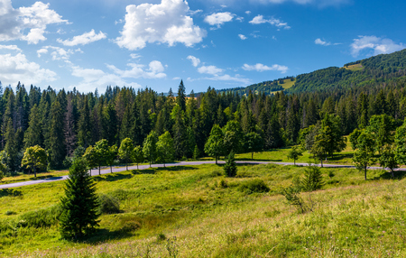 country road through forested hillside. beautiful nature scenery in morning