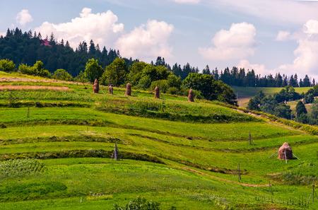 農村地域の草の斜面の干し草の山。夏の美しい農業風景 写真素材