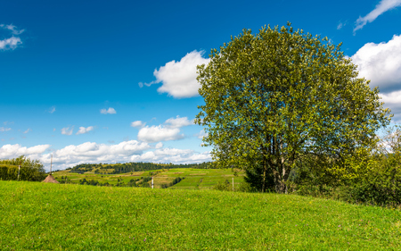 tree on the grassy rural hill. beautiful countryside summer scenery Stock Photo