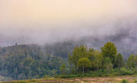 birch forest on foggy morning. beautiful nature scenery in autumn Stock Photo