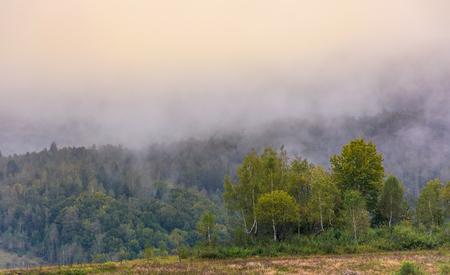 Birkenwald am nebligen Morgen . Schöne Naturlandschaft im Herbst Standard-Bild - 93262093