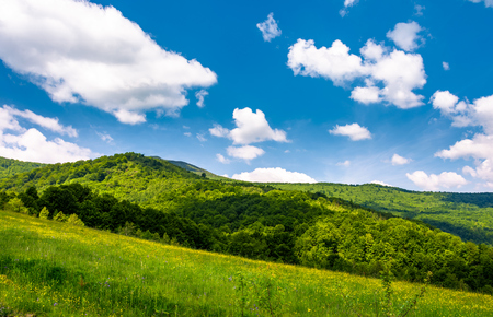 grassy fields at the foot of Pikui mountain. lovely countryside landscape on a beautiful summer day 写真素材