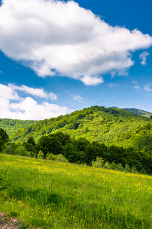 grassy fields at the foot of Pikui mountain. lovely countryside landscape on a beautiful summer day Stock Photo