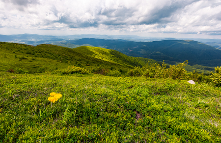 grassy hills of Carpathian alps in summer. beautiful nature scenery on a cloudy day. Stock Photo - 93112328
