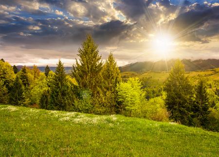 lovely countryside with grassy hills at sunset. beautiful nature of Carpathian mountains in springtime evening light