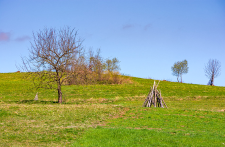 tree on the grassy hillside. springtime in rural area Stock Photo