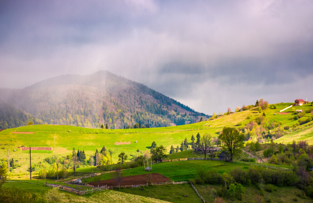 rain over the rural fields on hills. beautiful springtime landscape of Carpathian mountains.  Stock Photo
