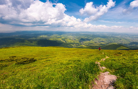 grassy slope of Pikui mountain in summer time. beautiful landscape of Carpathian mountains. Valley with rolling hill view from above