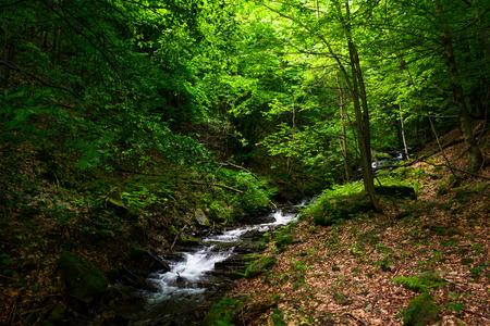 緑の森の小さな急速な小川。夏の美しい自然の背景 写真素材
