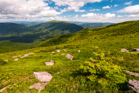 grassy slopes of Carpathian mountains. beautiful summer landscape on a cloudy day. location Runa mountain, Ukraine