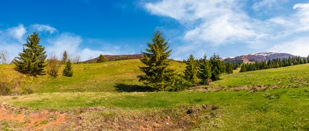 草の丘の上のスプルースの森のパノラマ。春のカルパチア山脈の美しい風景。場所 - ピリペツ村の谷、ウクライナ