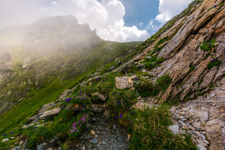 flowers and grass on rocky cliffs in fog. beautiful nature scenery in Fagarasan mountains on a cloudy summer day Stock Photo