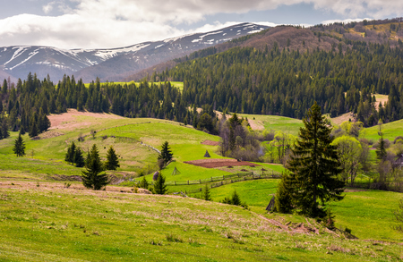 agricultural fields on grassy slopes in springtime. beautiful landscape of Carpathian mountain on overcast day
