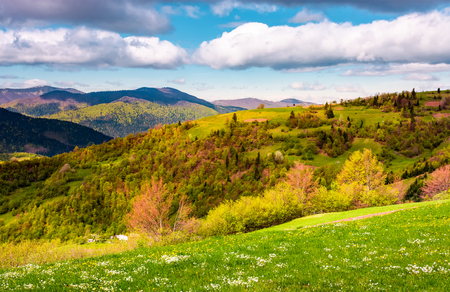 grassy and forested hill on a beautiful springtime. gorgeous landscape with mountain ridge under blue sky with clouds in a distance