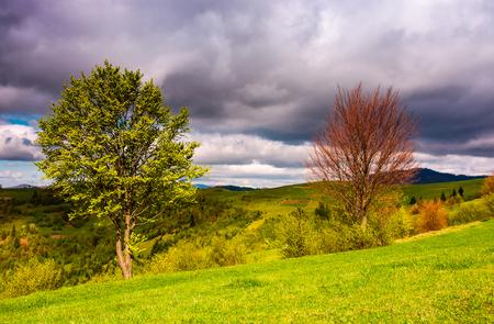 봄 날에 잔디 슬로프에서 두 나무입니다. 산악 지방의 아름다운 자연 경관