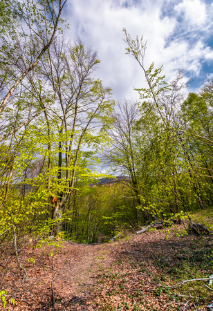 footpath through green forest in springtime. lovely nature scenery Reklamní fotografie