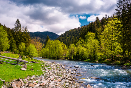 Carpathan 산 Tereblya 강합니다. Synevir 국립 공원의 농촌 부분에있는 아름다운 봄의 경치 스톡 콘텐츠
