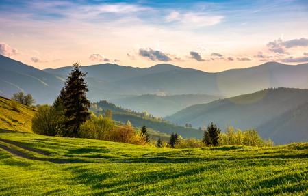 春の美しい田舎。夕方の山岳地帯の緑の草の斜面