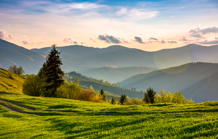 beautiful countryside in springtime. green grassy slopes of mountainous area in evening Stock Photo