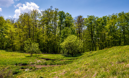 birch forest on grassy slope. lovely springtime nature background Stock Photo - 94020228