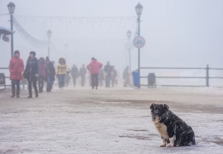 dakloze hond met bevroren bont zit in de buurt van de brug in de wintermist. onscherpe achtergrond met menigte van mensen die bewegen Stockfoto