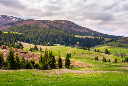 forested hills of Borzhava mountain ridge. beautiful nature scenery with grassy meadows on an overcast springtime day Stock Photo