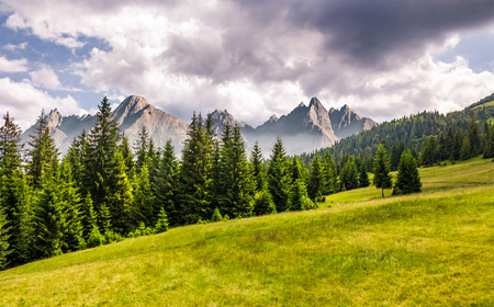 spruce forest on grassy slope. composite landscape with High Tatra mountains in the distance. lovely summer scenery Stock Photo