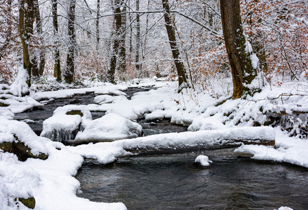 log through a brook in snowy forest with some weathered foliage on the branches. magic nature scenery in winter