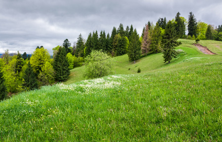 grassy field on a forested hill. lovely nature scenery on an overcast day in springtime