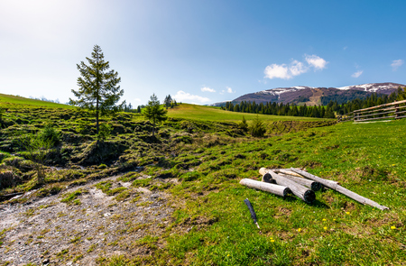 dry weathered logs in mountainous rural area in spring. lovely countryside landscape with fence on a grassy slope near the coniferous forest. beautiful mountain ridge with snowy peaks in the distance Stock Photo