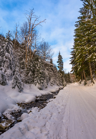 snow covered road along the path through forest. beautiful nature scenery in winter. location Synevyr National Nature Park, Ukraine 写真素材