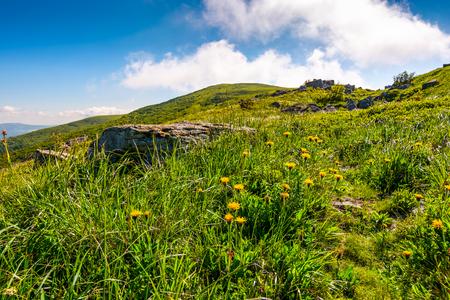 草の斜面に黄色のタンポポ。晴天の夏の日の美しい自然の風景 写真素材