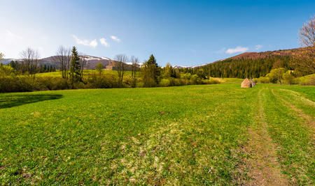 grassy pasture among the forest at the foot of the mountain. beautiful countryside springtime scenery