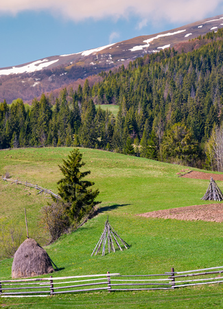 haystack behind the fence on a grassy slope. beautiful countryside scenery with coniferous forest on hillside of mountain with snowy top