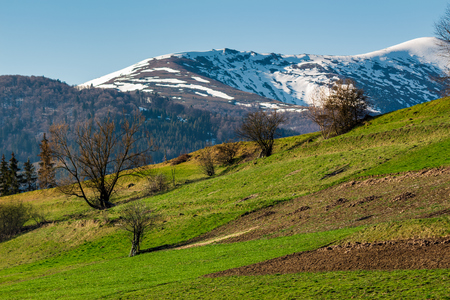 rural field on grassy slope under the blue sky. mountain with snowy top far in the distance. beautiful springtime scenery